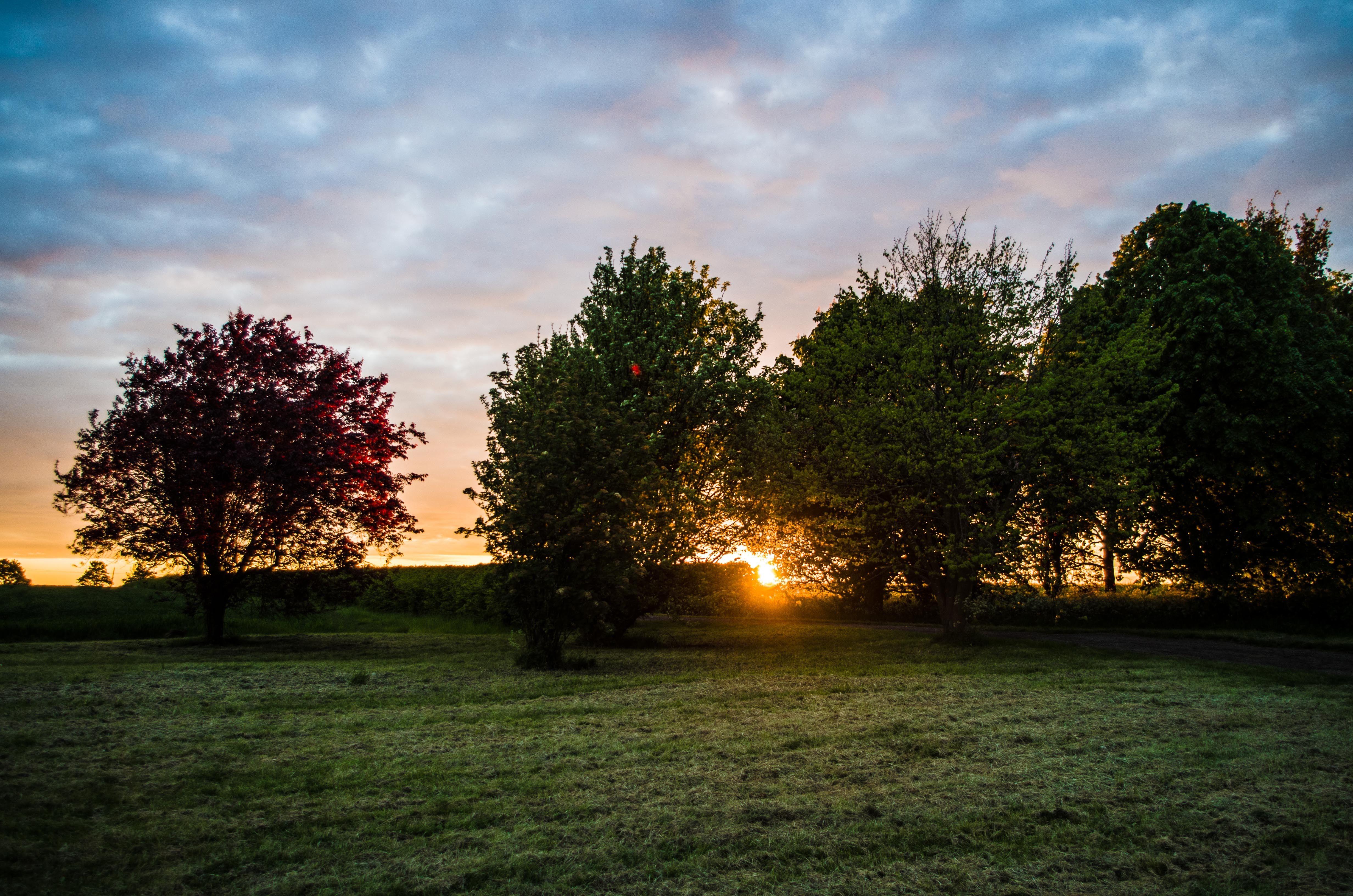 evening-west-lawn